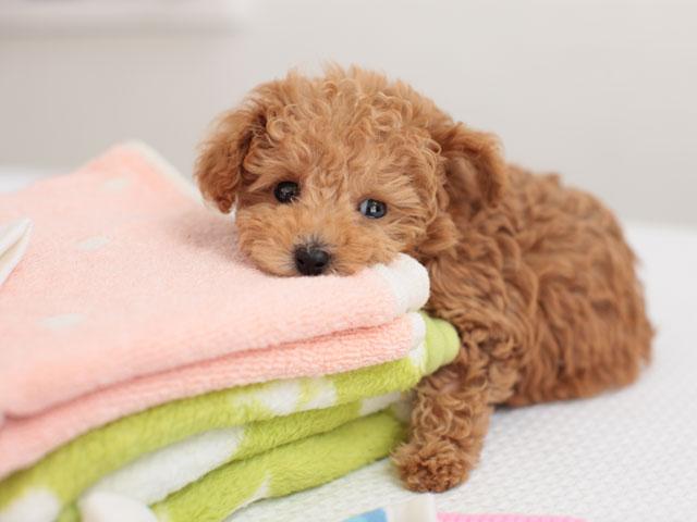 laundry-tips2